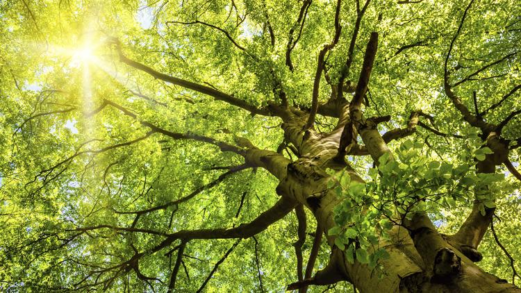 Got shade? ABQ considers new landscaping rules to encourage more trees